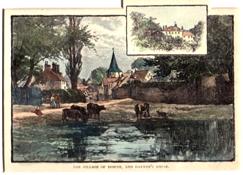 ANTIQUE PRINT: THE VILLAGE OF DOWNE, AND DARWIN'S HOUSE.